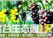 东莞金谷生态园趣味运动会+田园野炊+采摘水果+康体休闲一天游