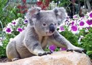 2020年东莞到澳大利亚自由行旅游签证热点