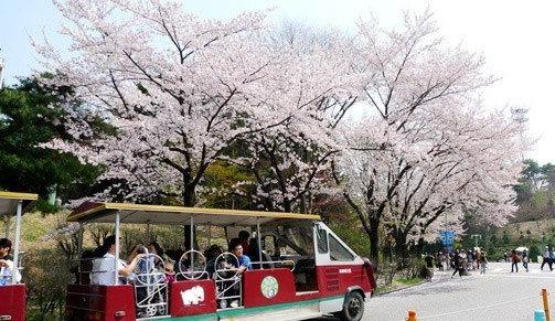 虎门旅行社盘点韩国旅游看点