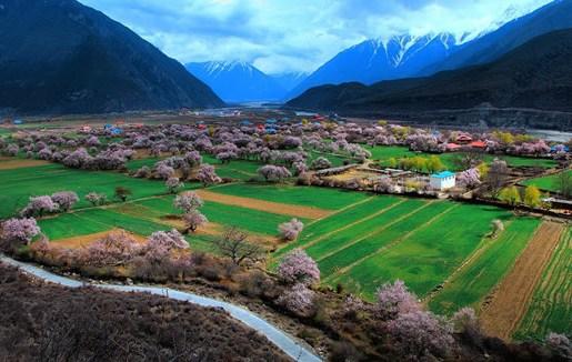 三月到西藏林芝赏花旅游